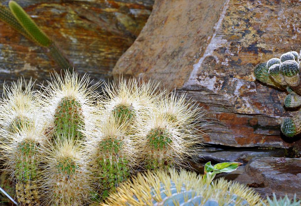 Cactus, Spur, Green, Prickly, Plant, Thorns, Nature