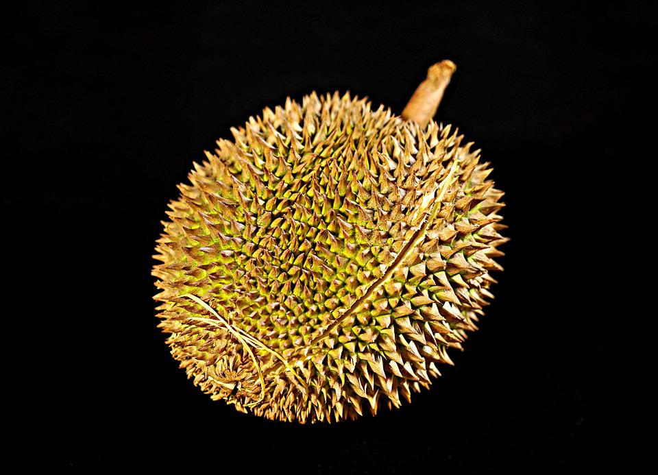 Durian Fruit, King Of Fruits, Thorny Fruit, Tropical