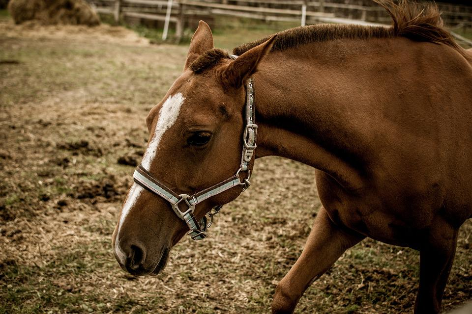Horse, Reiter, Portrait, Nature, Thoroughbred, Animal