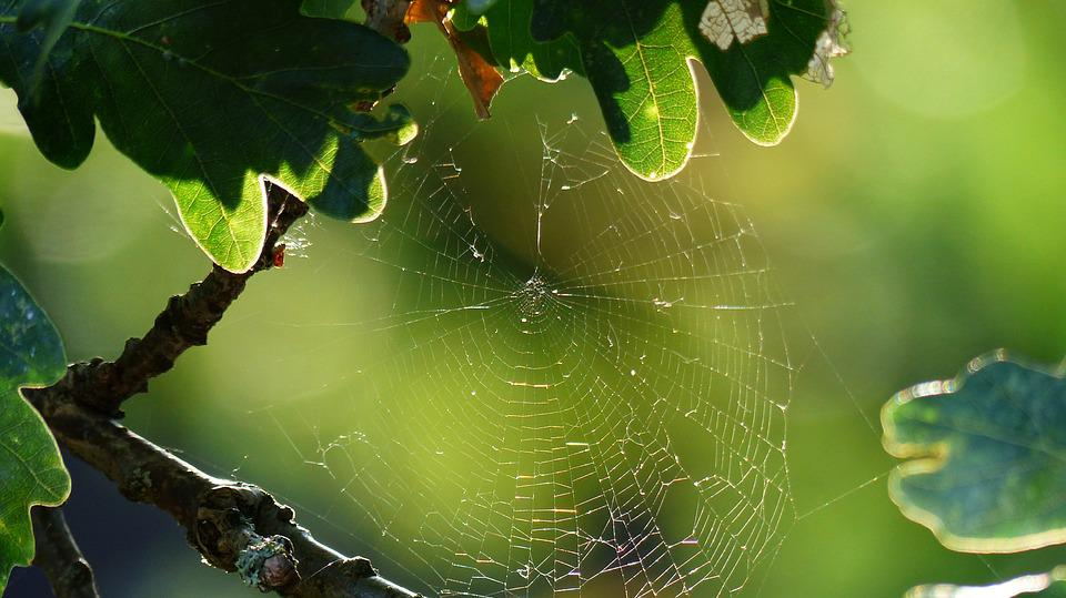Spiderweb, Rain, Dew, Nature, Cobweb, Insect, Thread