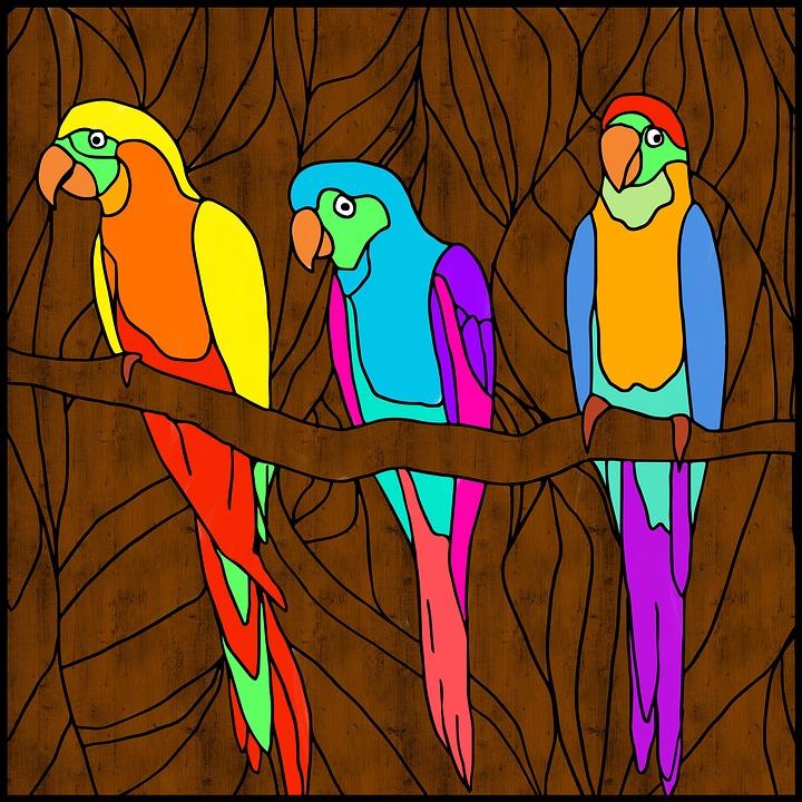 Parrots, Birds, Bright, Three