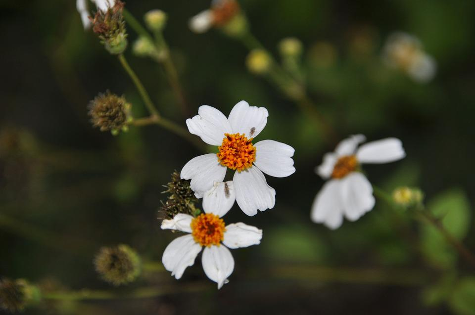 Wild Flowers, Flowers, Three Flowers, White