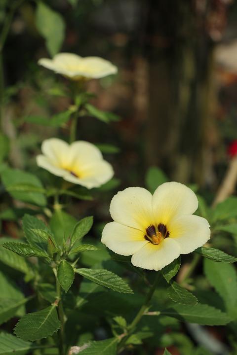 Three Yellow Flowers, Gardening, Green Leaves