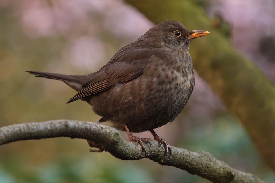 Bird, Throttle, Spring, Garden, Close