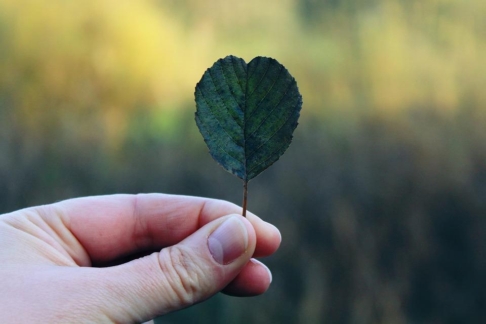 Hand, Leaf, Autumn, Finger, Nature, Close, Green, Thumb