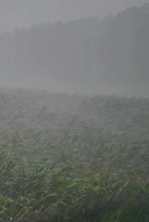 Thunderstorm, Downpour, Rain, Forward, Storm