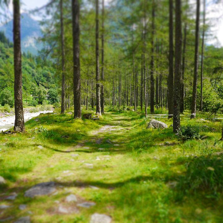 Forest Path, Forest, Ticino, Lerch Forest, Verzasca