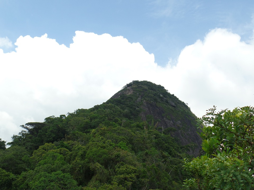 Mountain, Rio De Janeiro, Tijuca Forest