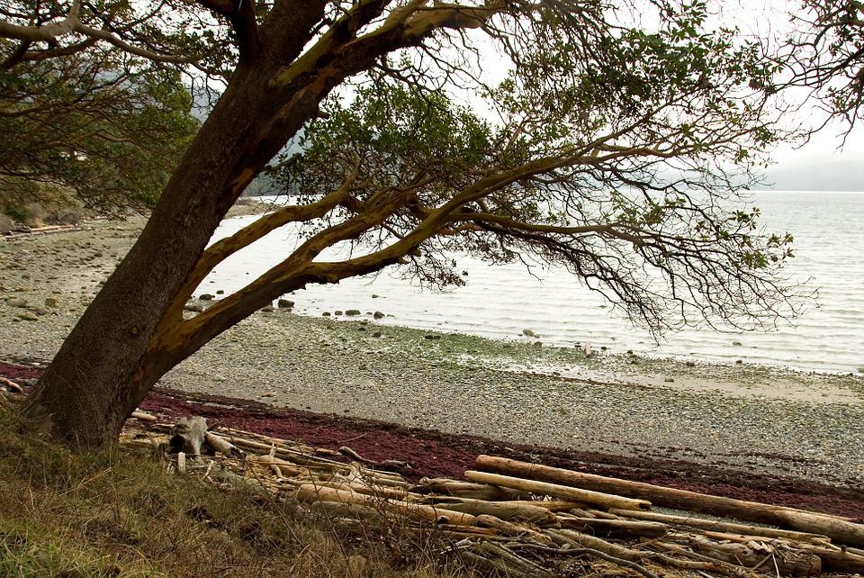 Driftwood, Shore, Tree, Log, Outdoors, Wood, Timber