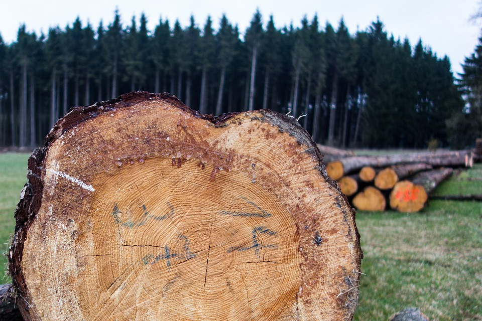 Wood, Timber, Forest Workers, Firewood, Growing Stock