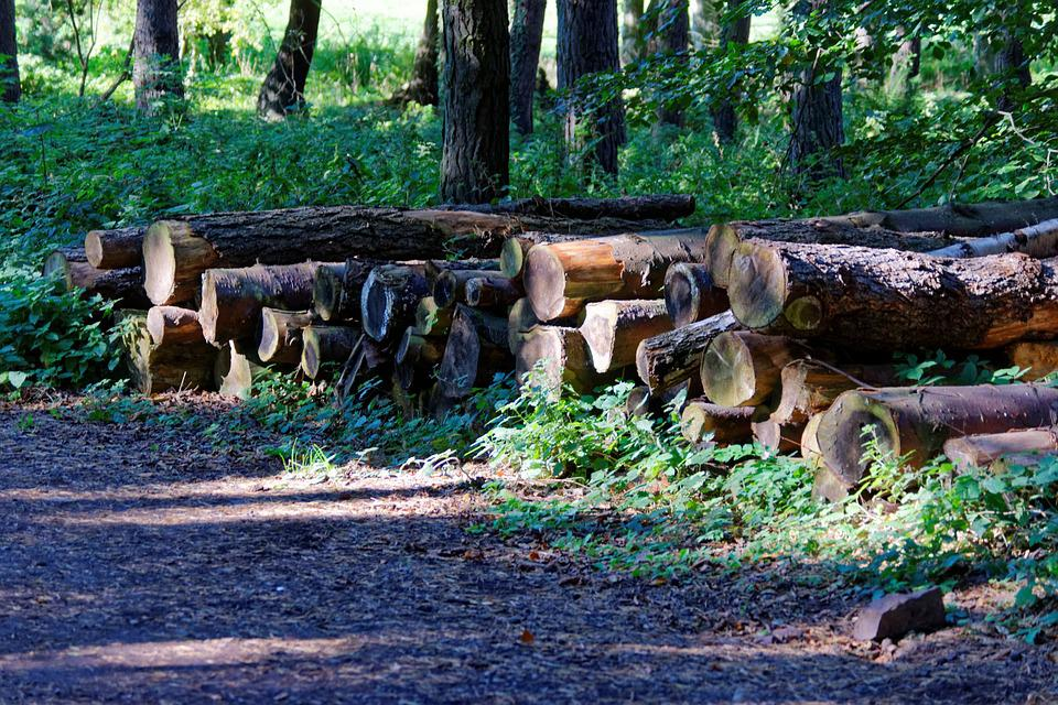 Logs, Trees, Lumber, Wood, Timber, Forest, Nature