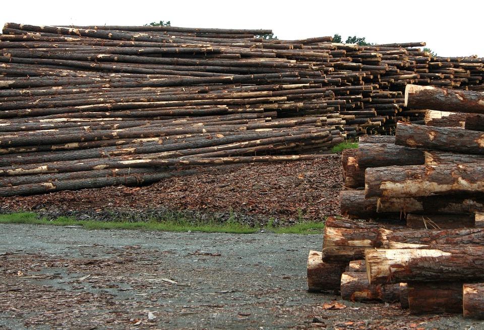 Logs, Sawmill, Lumberyard, Timber, Log, Forestry