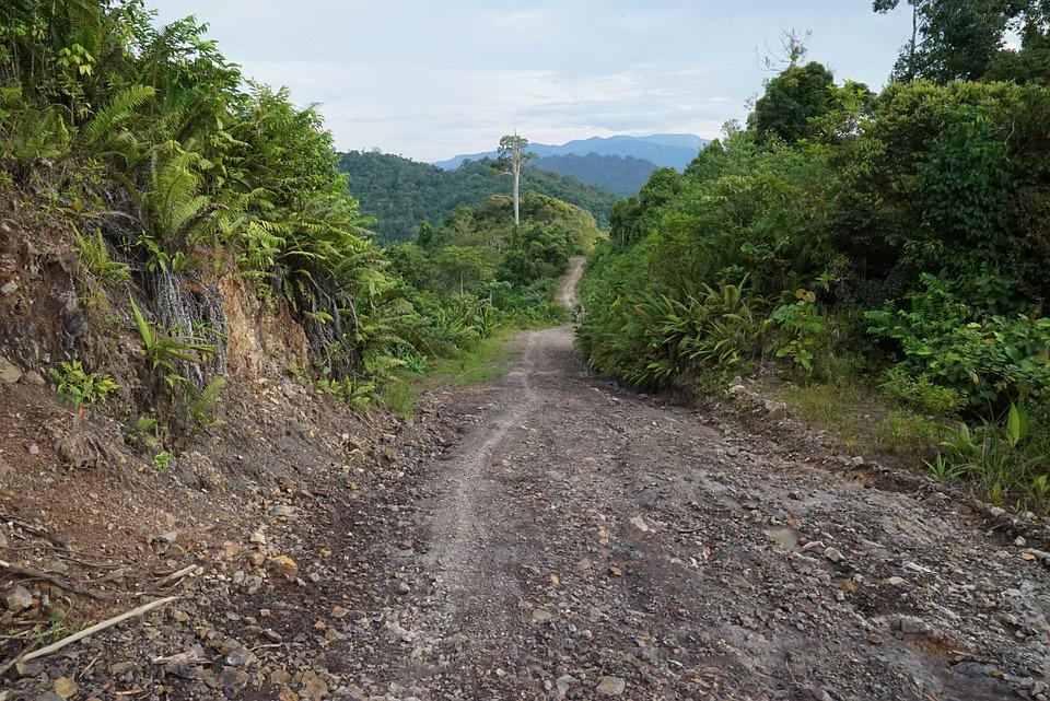 Timber Trails, Rain Forest, Logging Trails, Miri
