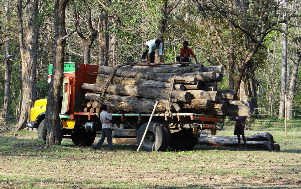 Timber, Lorry, Truck, Transport, Logs, Depot, Forest