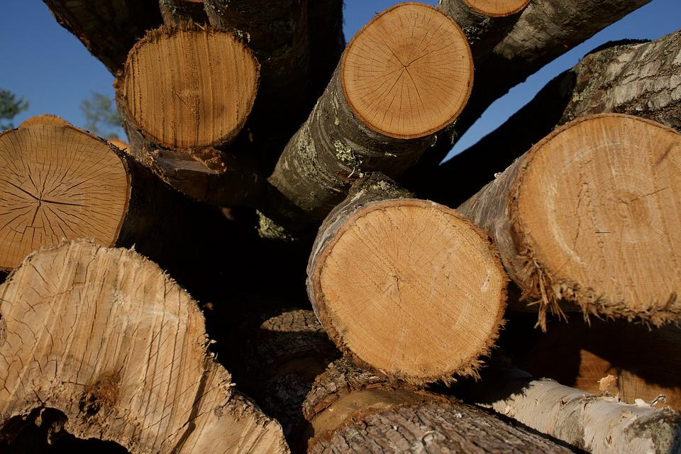 Wood, Lumber, Logs, Timber, Outdoors, Hardwood, Saw