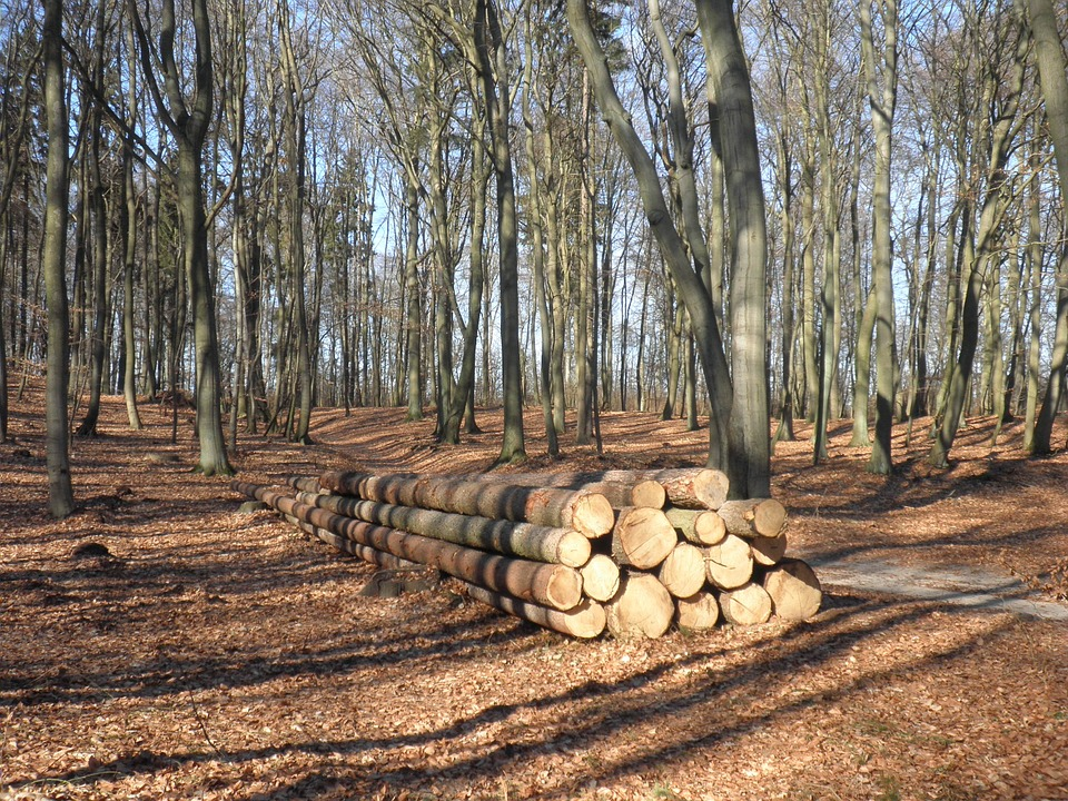 Wood, Wood Trunks, Sawn, Concerns, Timber, Nature