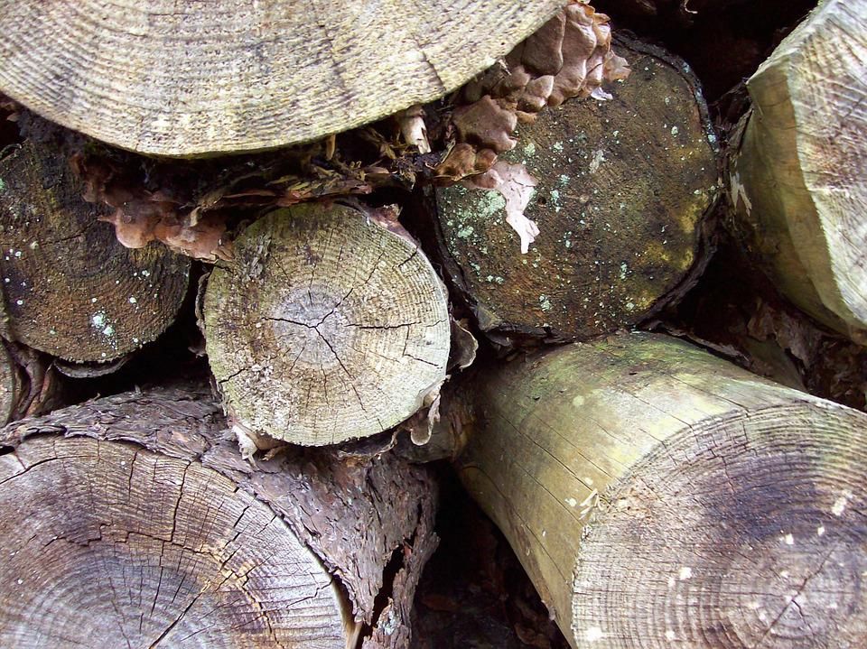 Woodpile, Logs, Trees, Timber, Forest, Stacked, Texture
