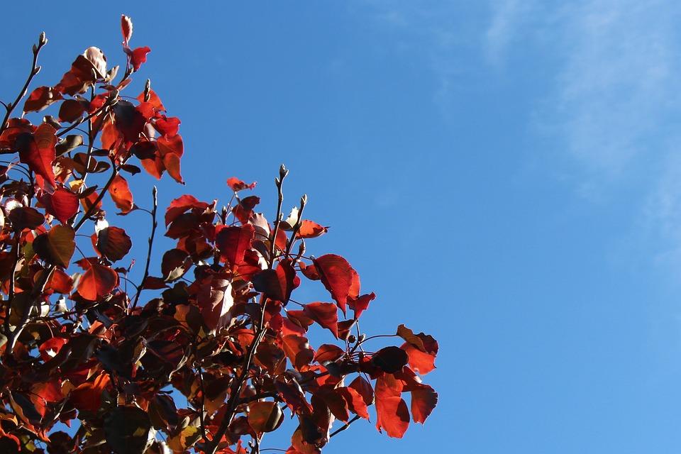 Autumn, Fall, Season, Time Of Year, Ecard, Postcard
