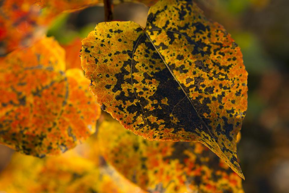 Autumn, Leaf, Nature, Color, Tree, Time Of Year