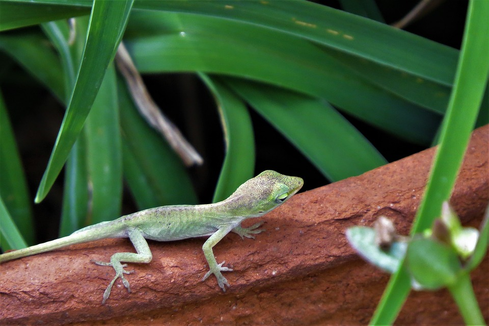 Reptile, Lizard, Tiny, Green, Wildlife