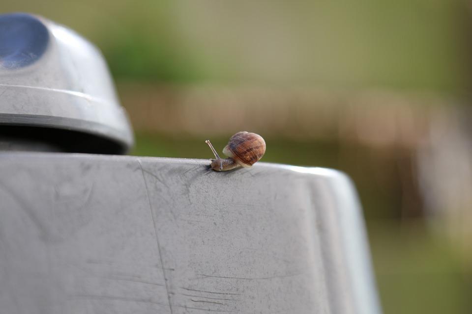 Animal, Snail, Tiny, Nature, Miniature