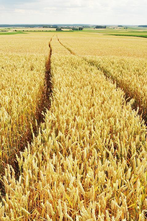 Wheat, Traces, Fields, Yellow, Away, Tire Brands