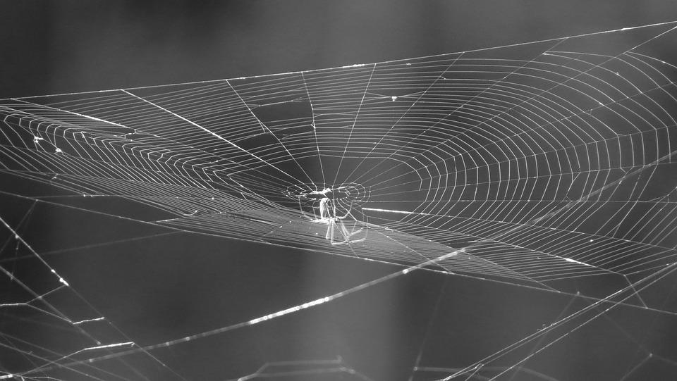 Landscape, Web, Black And White, Tissue, Spider