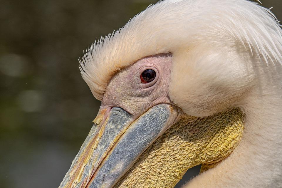Tisza-lake ököcentrum, Pásztó, Swan, Bird, Nature