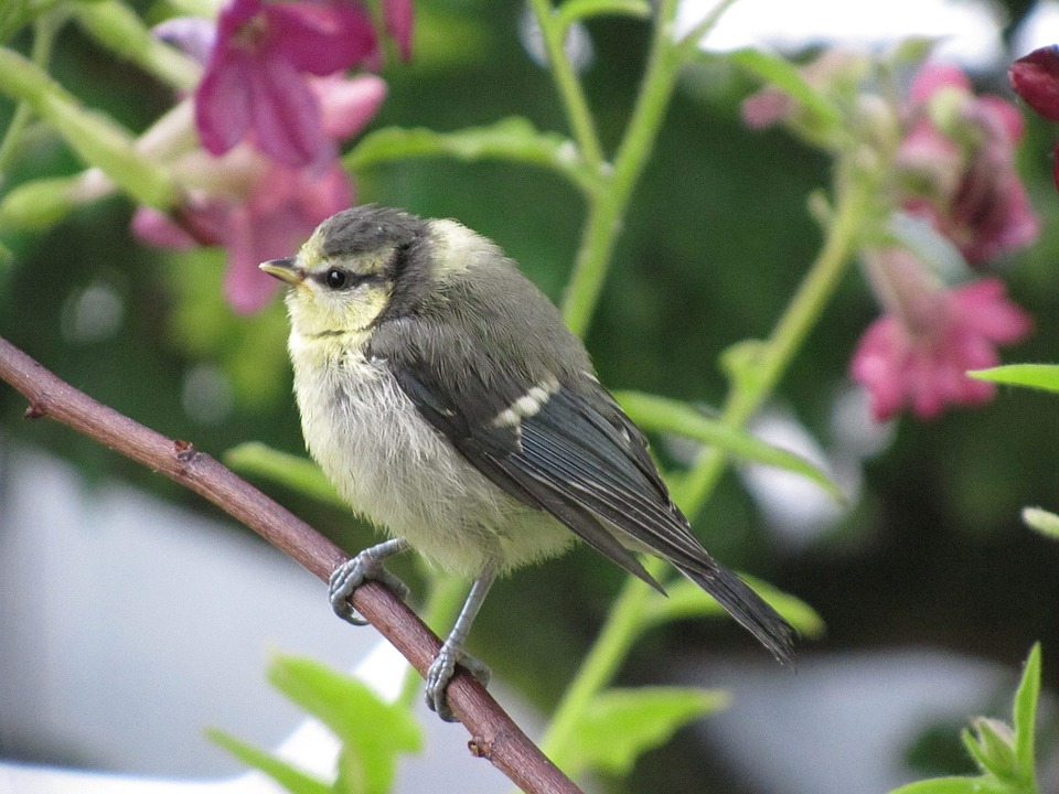 Bird, Tit, Songbird, Branch, Feather, Plumage, Sitting
