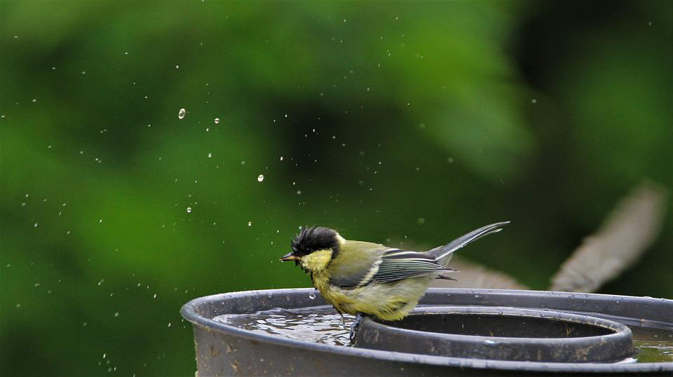 Tit, Young Animal, Bad, Watering Hole, Swim, Songbird