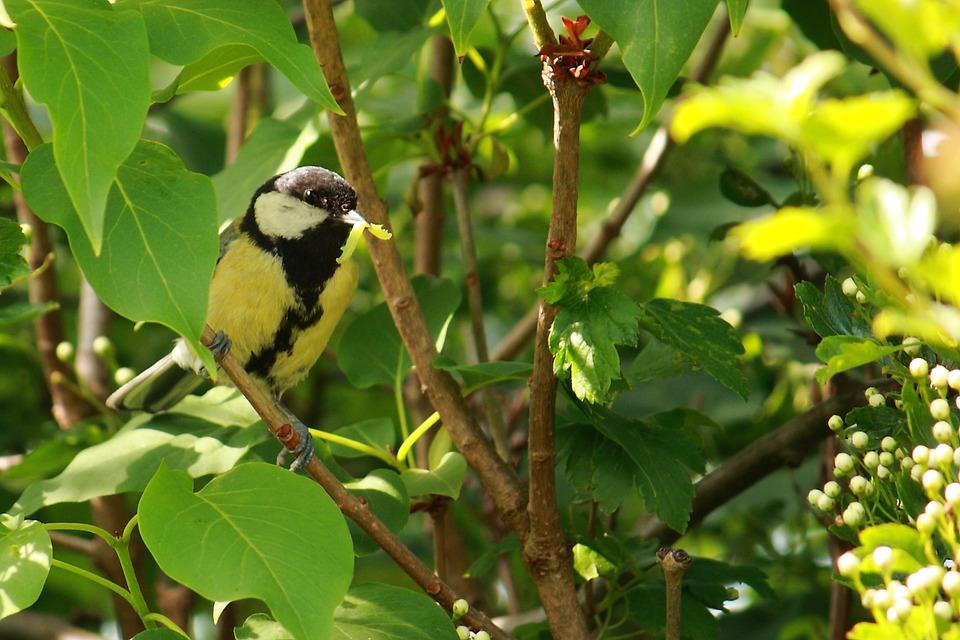 Titmouse, Bird, Spring, Natural, Expensive