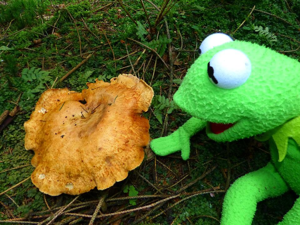 Kermit, Frog, Mushroom, To Find, Autumn, Forest, Green