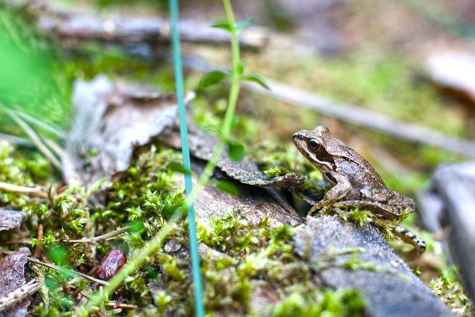 Frog, Forest, Nature, Toad, Green, Animal, Ecosystem
