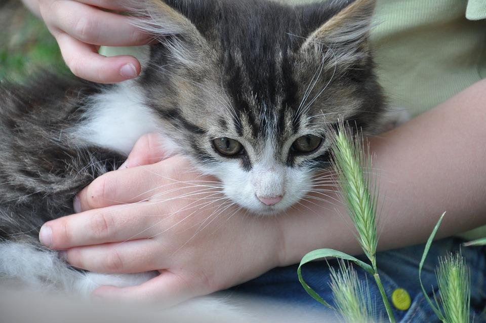 Kitten, Toddler, Summer