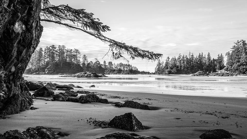 Beach, Tofino, Vancouver Island, British Columbia