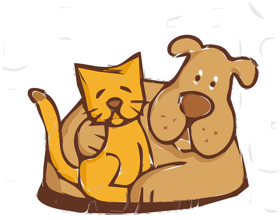 Friends, Cat, Dog, Together, Pet, Cute, Feline, Love