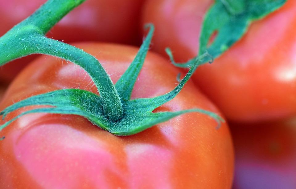 Tomato, Bush Tomato, Vegetables, Food, Red
