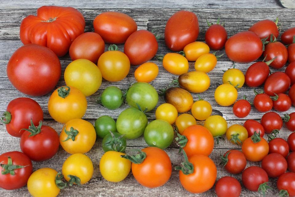 Tomato, Tomatoes, Diversity, Old Varieties, Vegetables