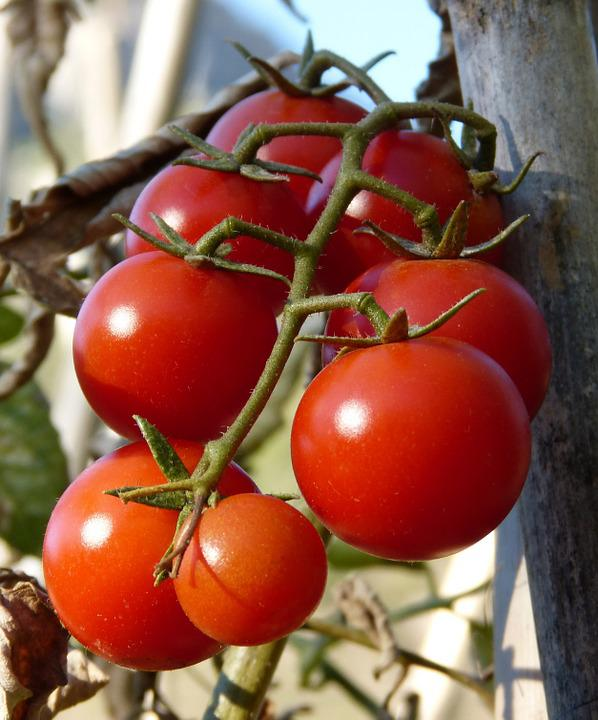 Tomatoes, Vine Tomatoes, Ecological