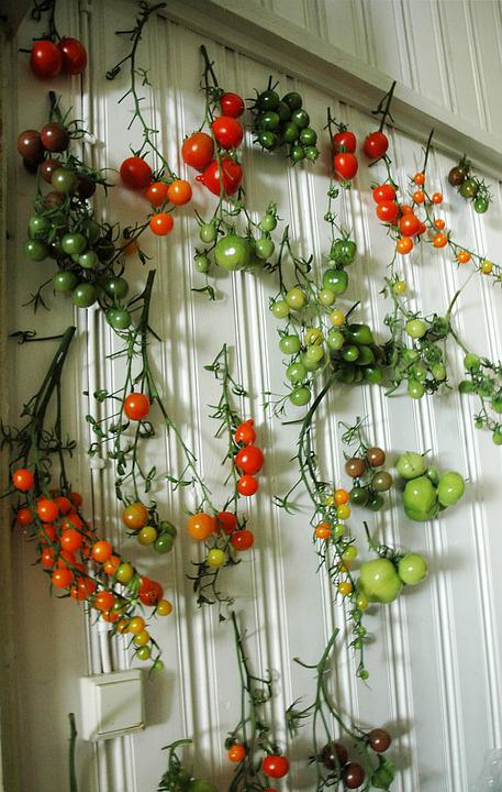 Tomato, Tomatoes, Wall, Red, Green, Harvest, Food