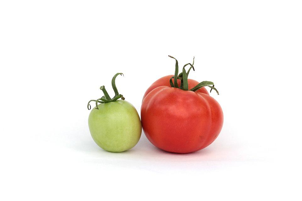 Tomatoes, Red, Green, Summer, Dacha, Harvest