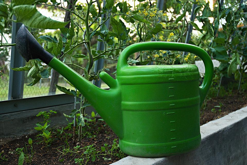 Sprinkler, Ewer, Greenhouse, Watering, Tomatoes
