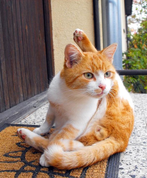 Cat, Tomcat, Peace