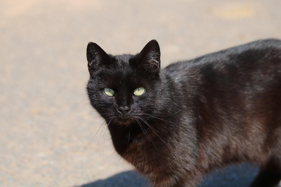 Black, Tomcat, Animal, Stable, Farm
