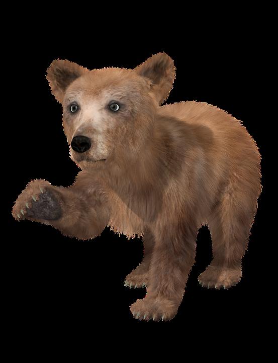 Bear, Brown Bear, Young, Toon, Teddy, Fur, Wild Animal
