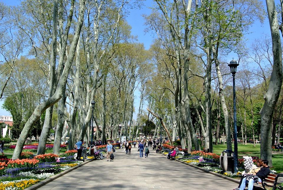 Topkapi, Palace, Gardens, Istanbul, Turkey, Flower