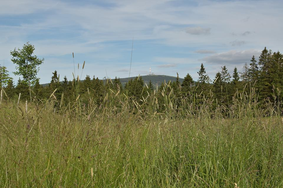 Torfhaus, Lower Saxony, Meadow, Landscape, Sky, Blue