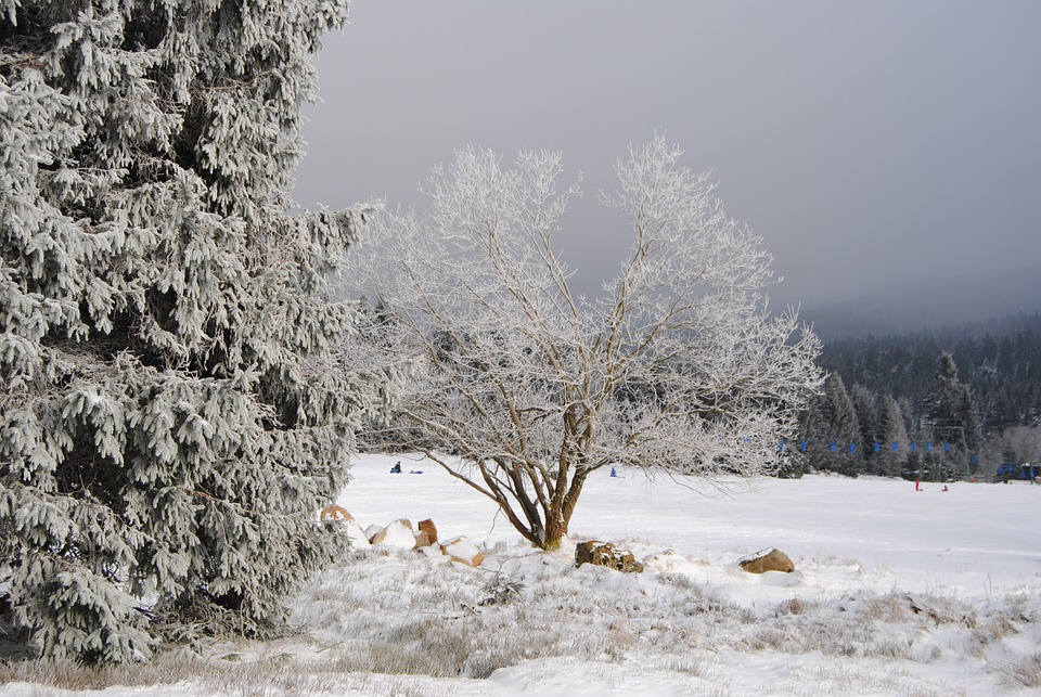 Resin, Torfhaus, Winter, Wintry, Snow