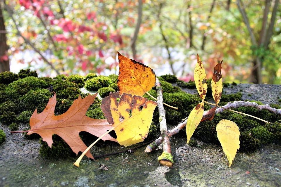 Moss, Autumn, Torn, Foliage, Collapse, Colorful, Dry