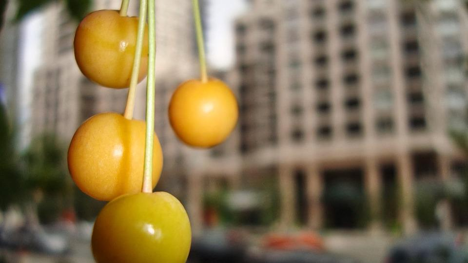 Yellow Cherries, City, Toronto